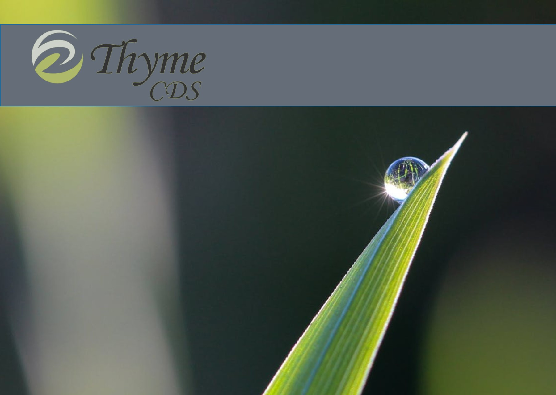 Thyme C.D.S. Banner